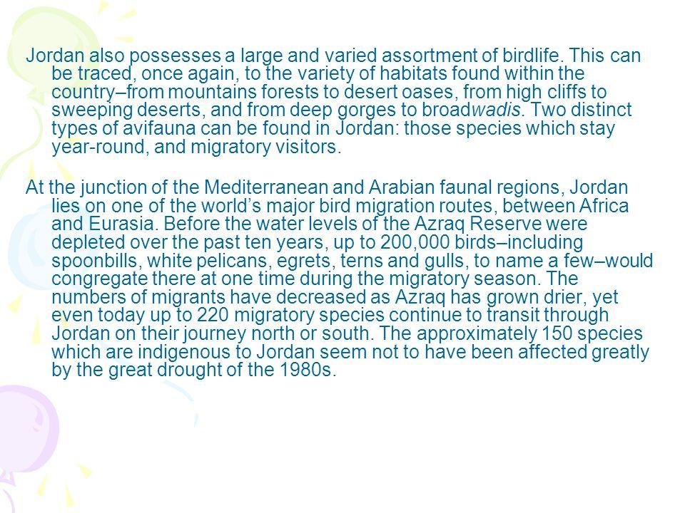 Jordan also possesses a large and varied assortment of birdlife.
