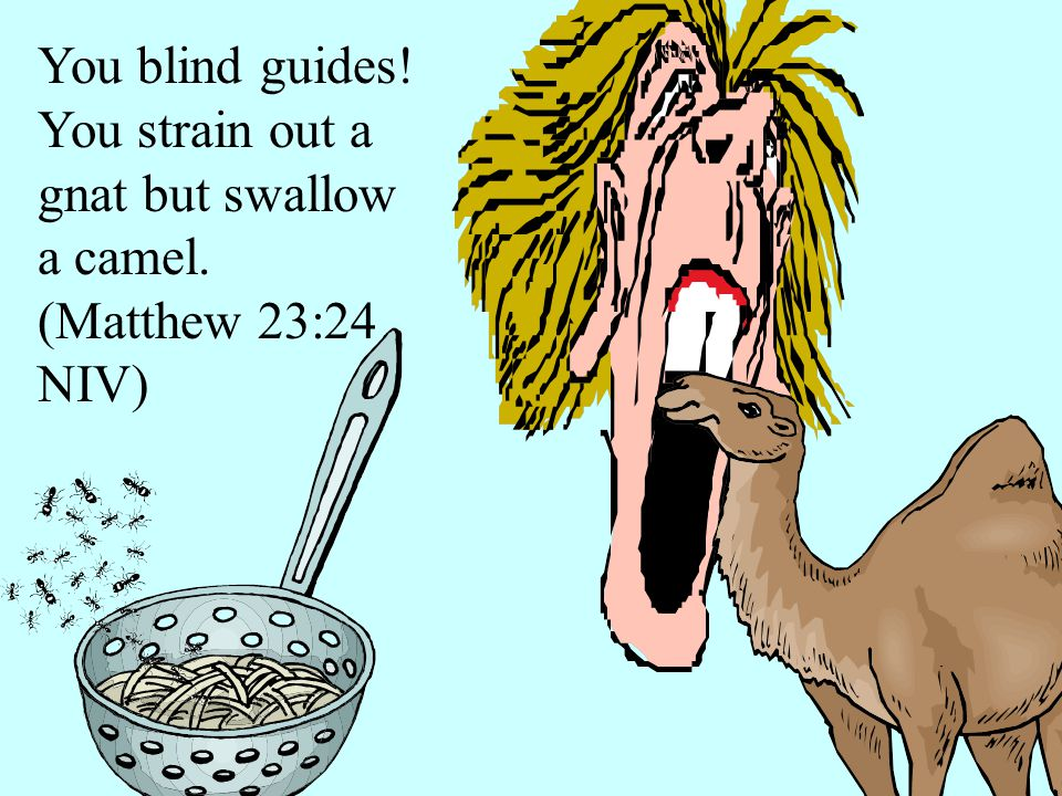 You blind guides! You strain out a gnat but swallow a camel. (Matthew 23:24 NIV)