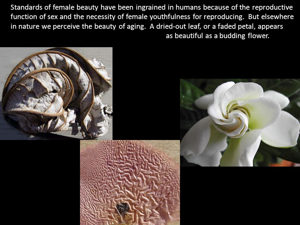 Standards of female beauty have been ingrained in humans because of the reproductive function of sex and the necessity of female youthfulness for reproducing.
