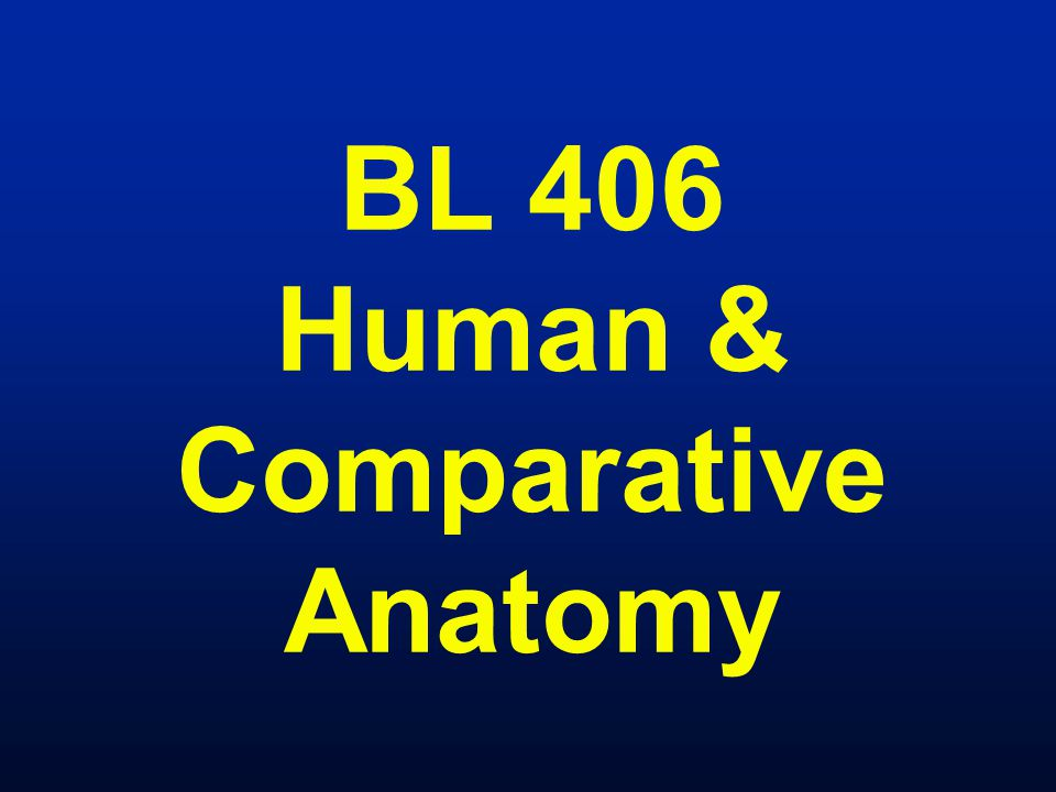 BL 406 Human & Comparative Anatomy