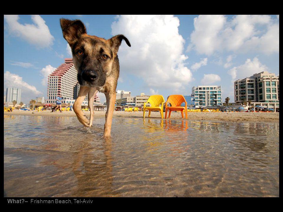 What?– Frishman Beach, Tel-Aviv
