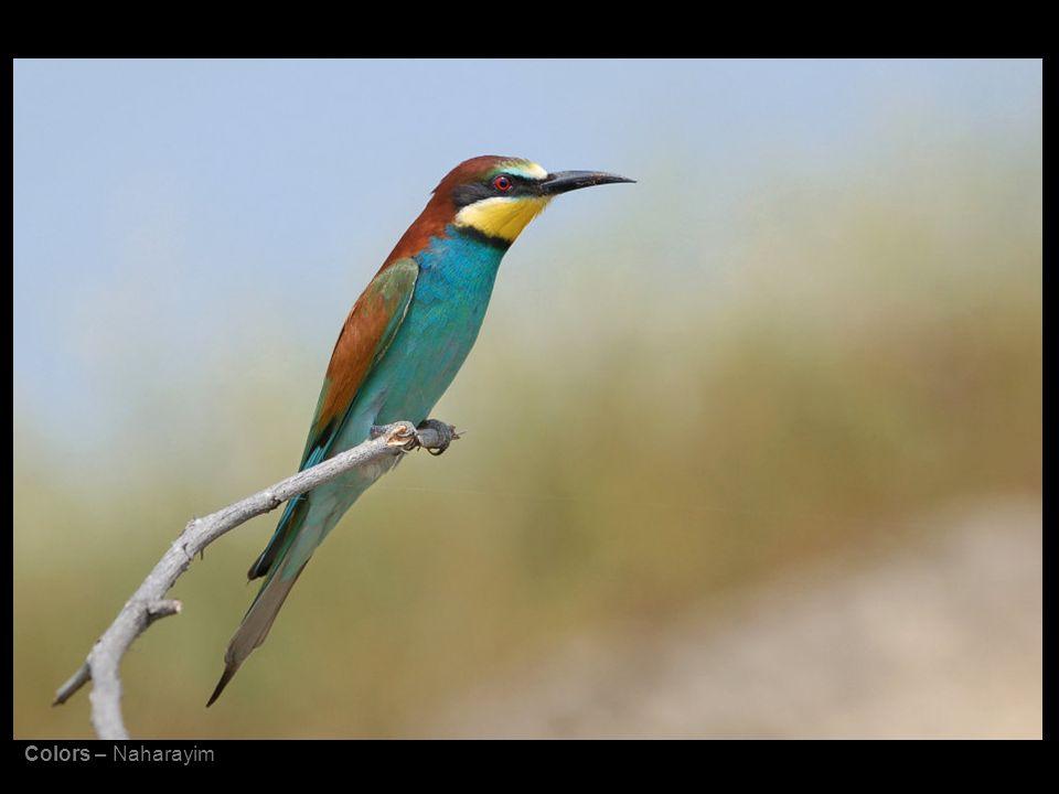 Colors – Naharayim
