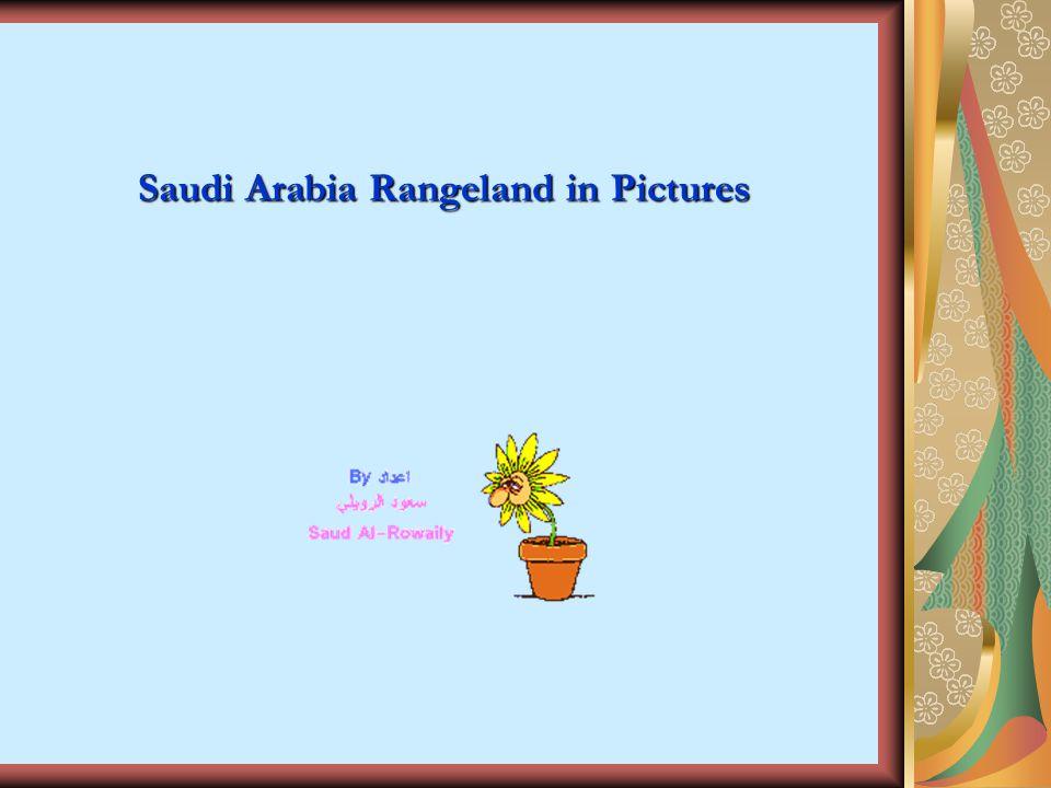 Saudi Arabia Rangeland in Pictures