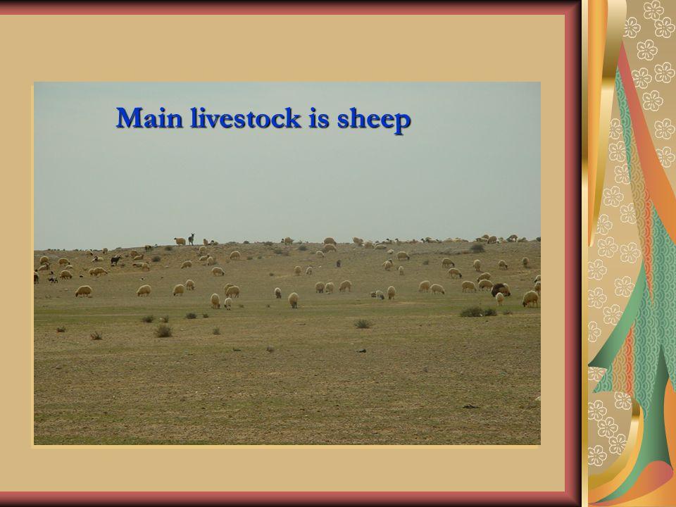 Main livestock is sheep