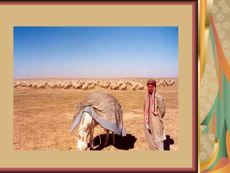 The Arabian Peninsula (AP) is a vast landmass, where Saudi Arabia occupies 80 percent of the Peninsula.