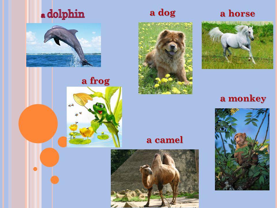 a dog a horse a frog a camel a monkey