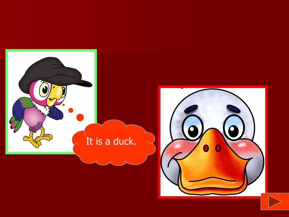 No, it isn't. Yes, it is. Yes, it is. No, try again! Is it a duck?