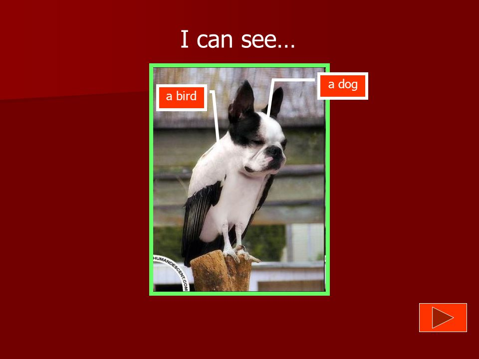 What animals can you see? I can see…