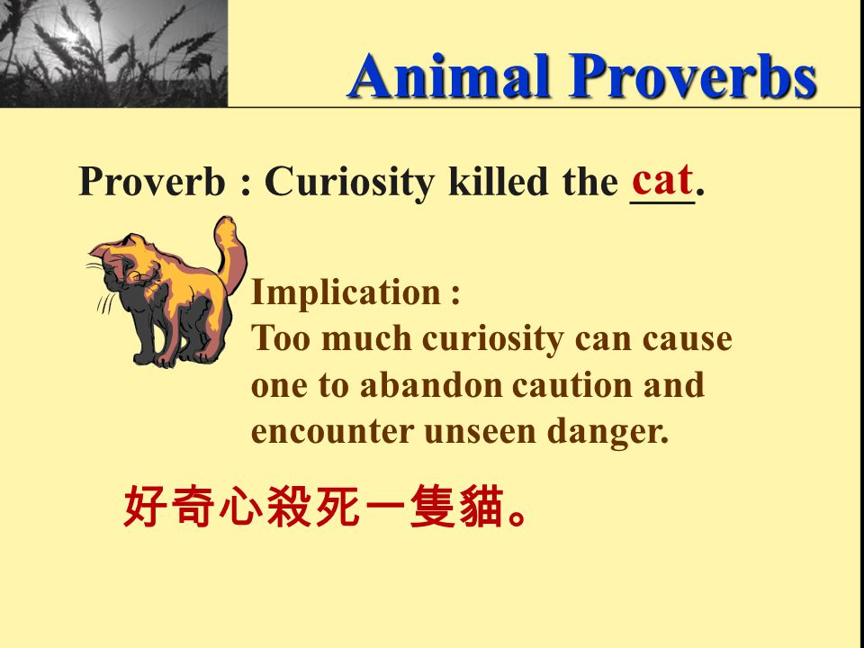 Animal Proverbs Proverb : You can't teach an old ______ new tricks. dog 老狗學不來新把戲。 Implication : It is very difficult to teach old people new skills or