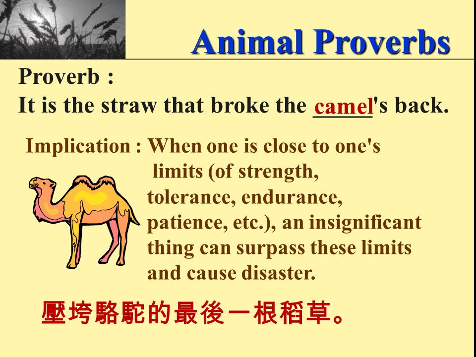 Proverb : The early ____ catches the ____. birdworm 早起的鳥兒有蟲吃。 Animal Proverbs Implication : The one who rises early and is diligent reaps the rewards;