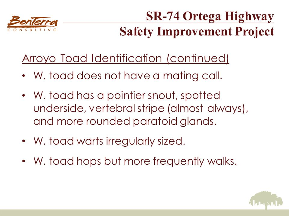 SR-74 Ortega Highway Safety Improvement Project Arroyo Toad Identification (continued) W.