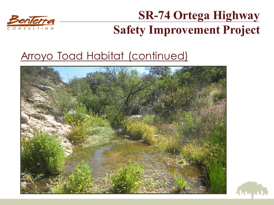 SR-74 Ortega Highway Safety Improvement Project Arroyo Toad Habitat (continued)