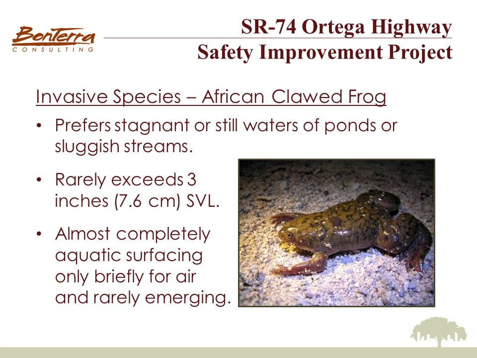 SR-74 Ortega Highway Safety Improvement Project Invasive Species – African Clawed Frog Prefers stagnant or still waters of ponds or sluggish streams.
