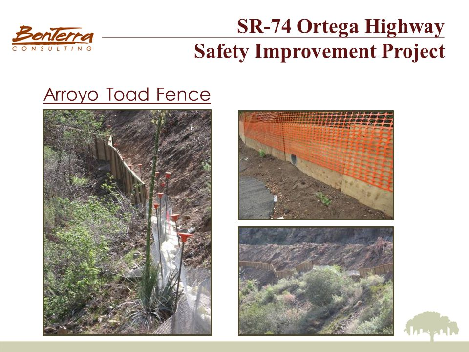 SR-74 Ortega Highway Safety Improvement Project Arroyo Toad Status (continued) In 2007, the Center for Biological Diversity sued the Department of Interior decisions reducing critical habitat for 13 species, including the arroyo toad.