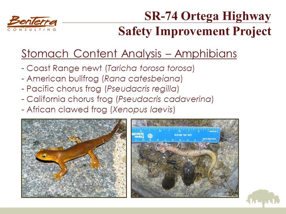 SR-74 Ortega Highway Safety Improvement Project Stomach Content Analysis – Amphibians - Coast Range newt (Taricha torosa torosa) - American bullfrog (Rana catesbeiana) - Pacific chorus frog (Pseudacris regilla) - California chorus frog (Pseudacris cadaverina) - African clawed frog (Xenopus laevis)