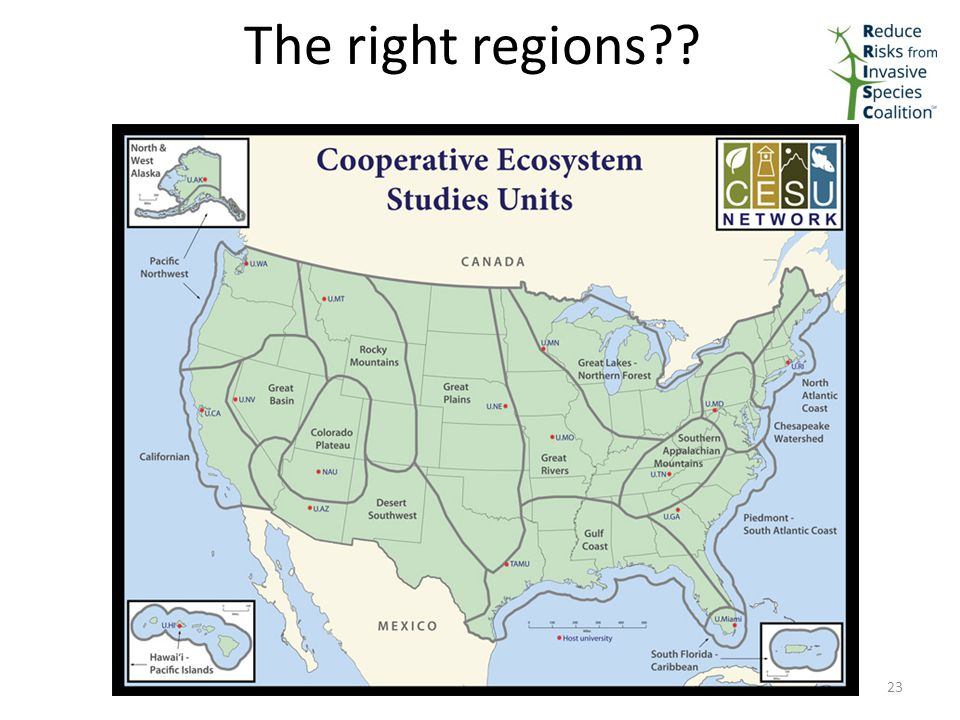 The right regions 23