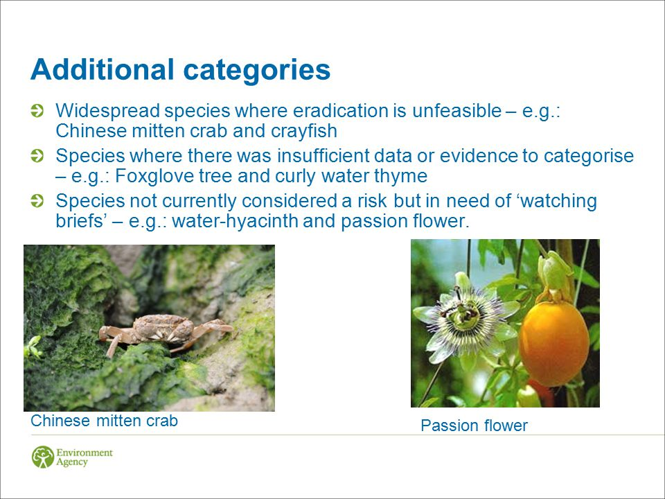 Additional categories Widespread species where eradication is unfeasible – e.g.: Chinese mitten crab and crayfish Species where there was insufficient