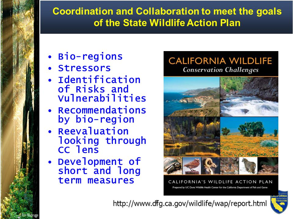 15 Streamlining - Conservation Strategies Development Santa Rosa Plain Conservation Strategy – vernal pools, California tiger salamander and 4 listed plant species East Alameda County Conservation Strategy UC Merced siting/Eastern Merced Conservation Strategy – vernal pool complexes Western Merced Co – kit fox movement corridors