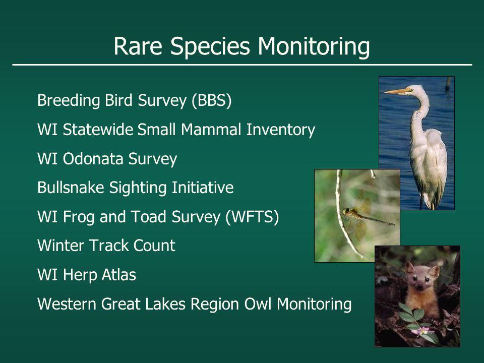 Rare Species Monitoring Breeding Bird Survey (BBS) WI Statewide Small Mammal Inventory WI Odonata Survey Bullsnake Sighting Initiative WI Frog and Toad Survey (WFTS) Winter Track Count WI Herp Atlas Western Great Lakes Region Owl Monitoring