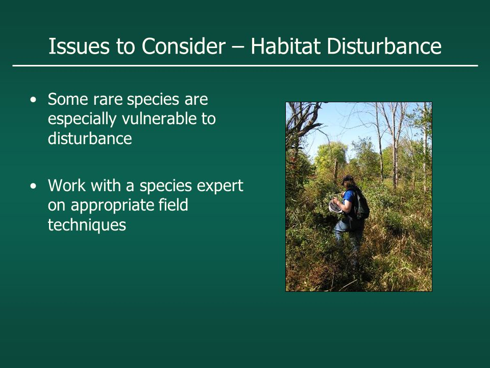 Issues to Consider – Habitat Disturbance Some rare species are especially vulnerable to disturbance Work with a species expert on appropriate field techniques