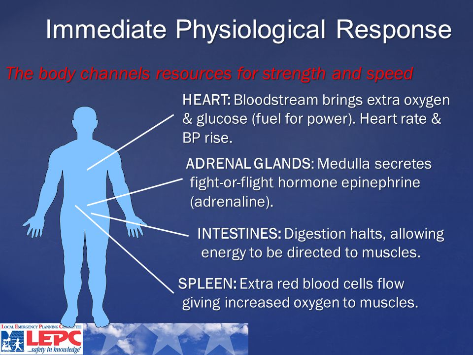 HEART: Bloodstream brings extra oxygen & glucose (fuel for power).
