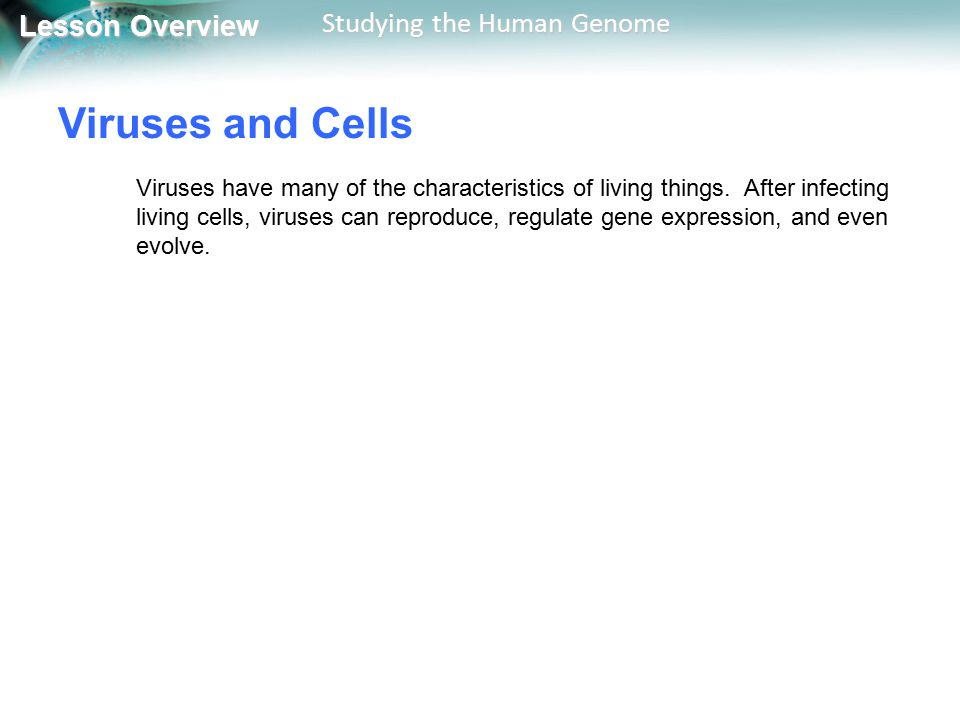 Lesson Overview Lesson Overview Studying the Human Genome Viruses and Cells Viruses have many of the characteristics of living things. After infecting