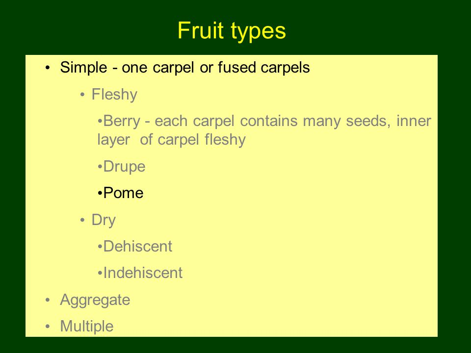 Fruit types Simple - one carpel or fused carpels Fleshy Berry - each carpel contains many seeds, inner layer of carpel fleshy Drupe Pome Dry Dehiscent