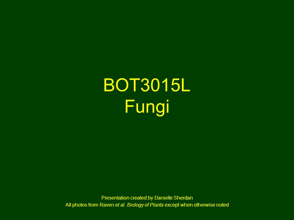 BOT3015L Fungi Presentation created by Danielle Sherdan All photos from Raven et al. Biology of Plants except when otherwise noted