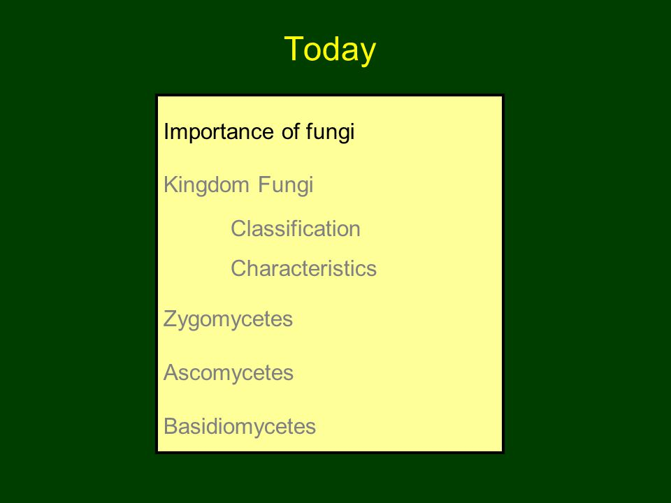 Today Importance of fungi Kingdom Fungi Classification Characteristics Zygomycetes Ascomycetes Basidiomycetes
