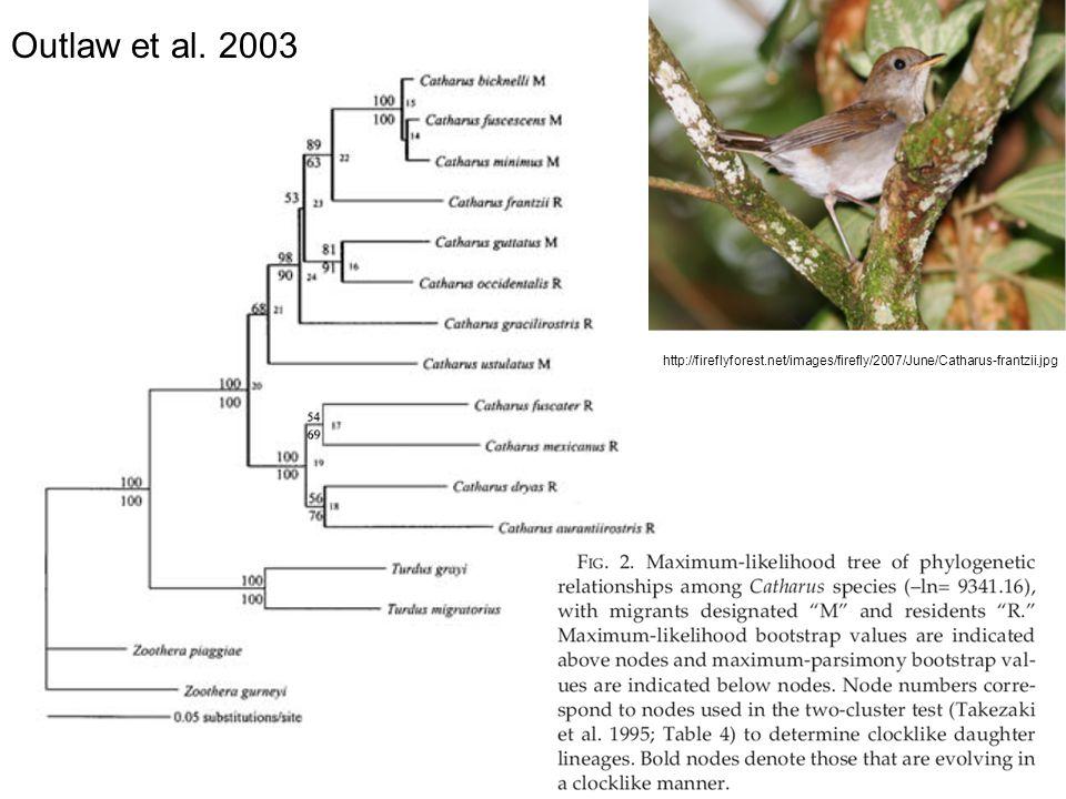 http://fireflyforest.net/images/firefly/2007/June/Catharus-frantzii.jpg Outlaw et al. 2003