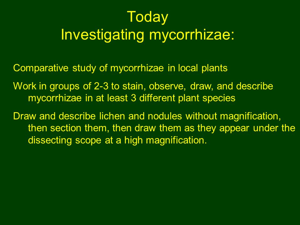 Today Investigating mycorrhizae: Comparative study of mycorrhizae in local plants Work in groups of 2-3 to stain, observe, draw, and describe mycorrhizae in at least 3 different plant species Draw and describe lichen and nodules without magnification, then section them, then draw them as they appear under the dissecting scope at a high magnification.