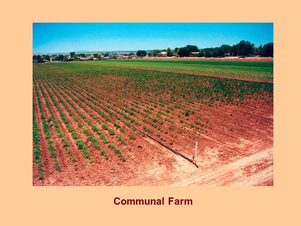 Communal Farm