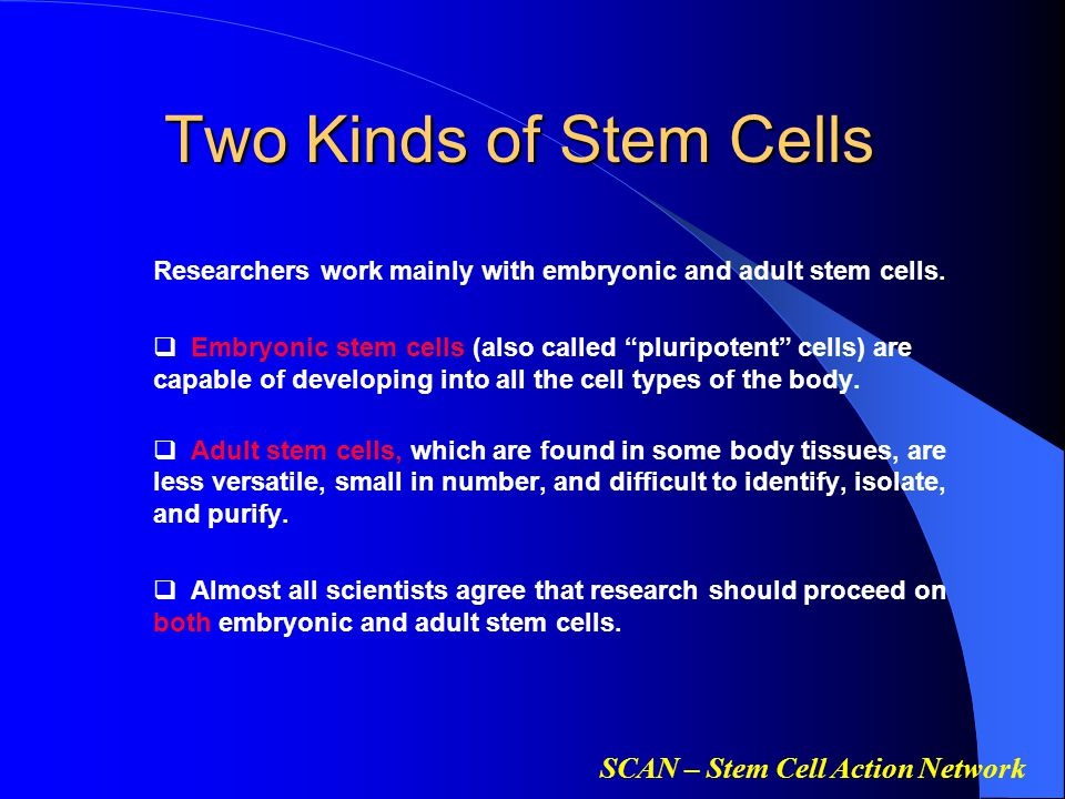 SCAN – Stem Cell Action Network Two Kinds of Stem Cells Researchers work mainly with embryonic and adult stem cells.  Embryonic stem cells (also call