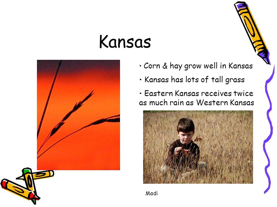 Madi Kansas Corn & hay grow well in Kansas Kansas has lots of tall grass Eastern Kansas receives twice as much rain as Western Kansas