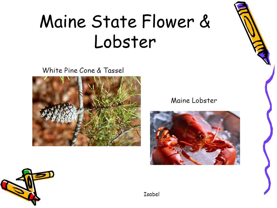 Isabel Maine State Flower & Lobster White Pine Cone & Tassel Maine Lobster