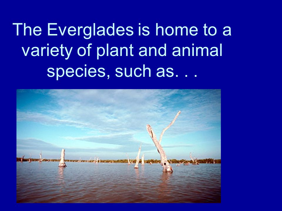 The Everglades is home to a variety of plant and animal species, such as...