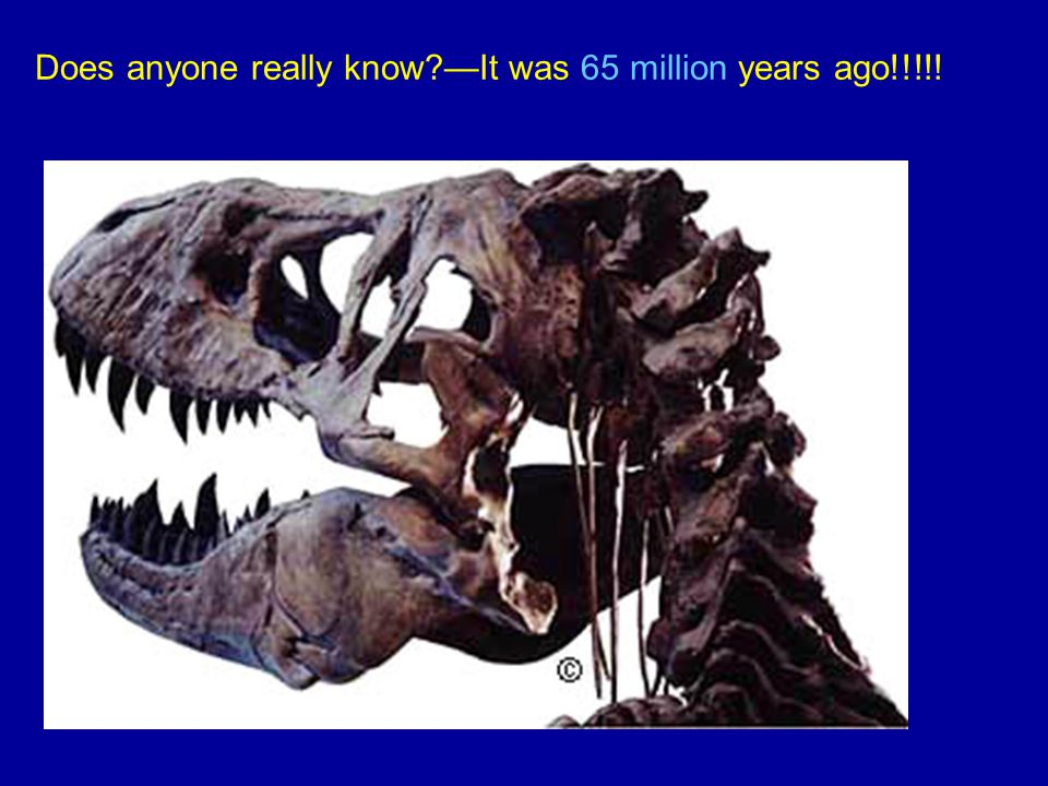 Does anyone really know?—It was 65 million years ago!!!!!