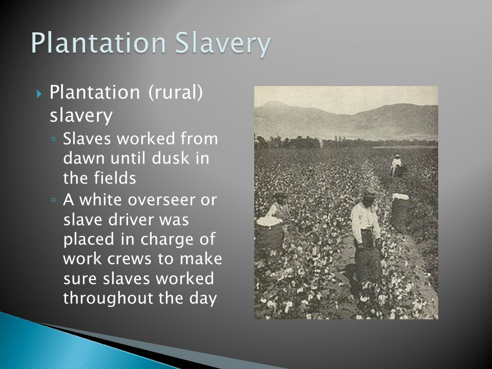  Plantation (rural) slavery ◦ Slaves worked from dawn until dusk in the fields ◦ A white overseer or slave driver was placed in charge of work crews to make sure slaves worked throughout the day