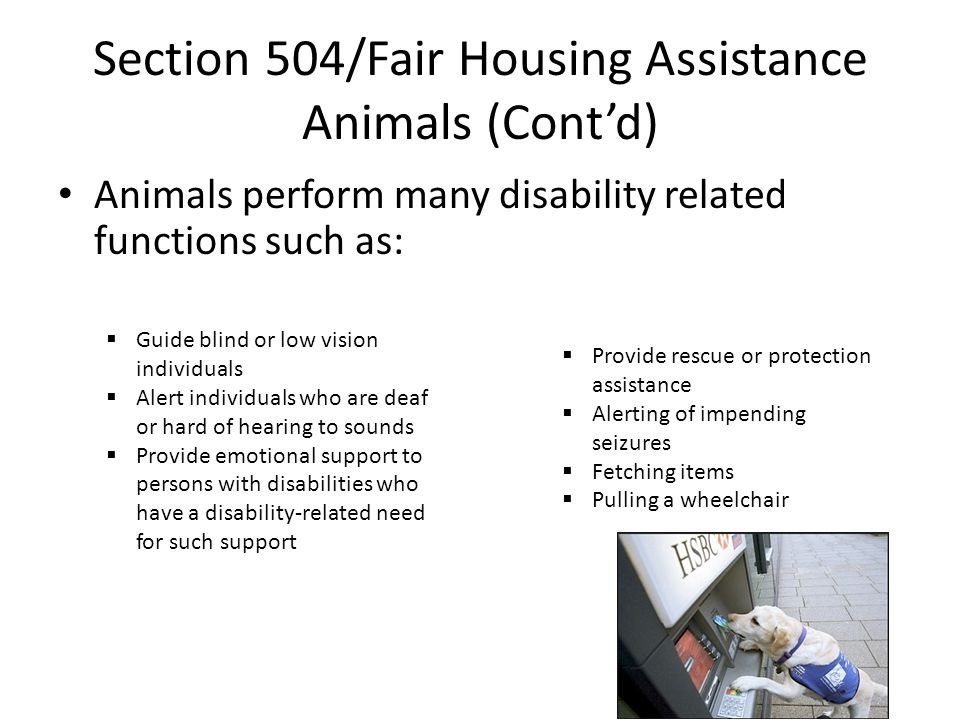 Section 504/Fair Housing Assistance Animals (Cont'd) Animals perform many disability related functions such as:  Guide blind or low vision individuals  Alert individuals who are deaf or hard of hearing to sounds  Provide emotional support to persons with disabilities who have a disability-related need for such support  Provide rescue or protection assistance  Alerting of impending seizures  Fetching items  Pulling a wheelchair