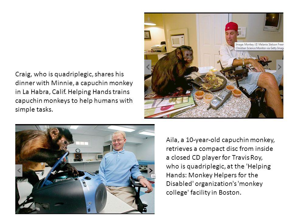 Craig, who is quadriplegic, shares his dinner with Minnie, a capuchin monkey in La Habra, Calif. Helping Hands trains capuchin monkeys to help humans