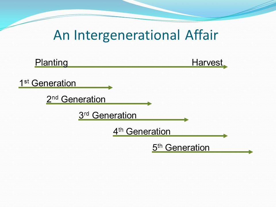 An Intergenerational Affair PlantingHarvest 1 st Generation 2 nd Generation 3 rd Generation 4 th Generation 5 th Generation