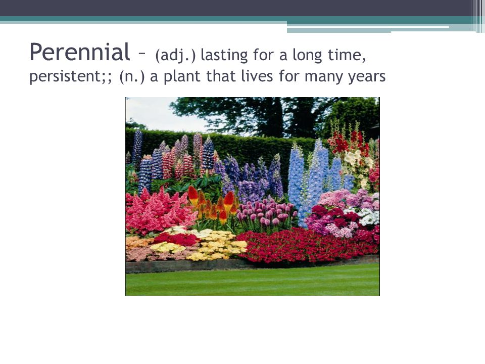 Perennial – (adj.) lasting for a long time, persistent;; (n.) a plant that lives for many years