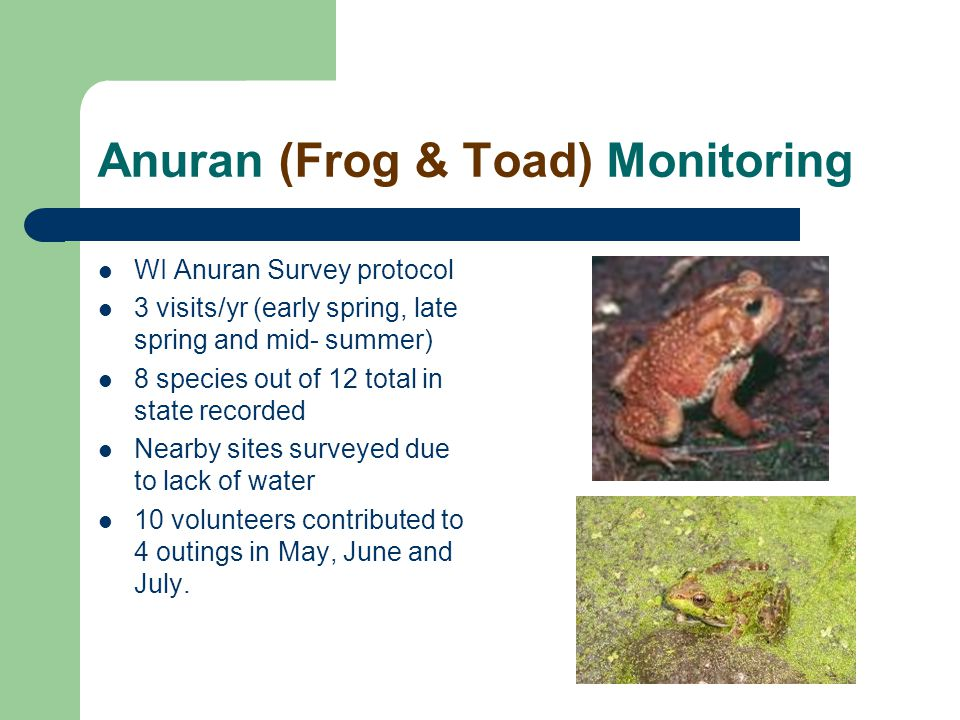 Anuran (Frog & Toad) Monitoring WI Anuran Survey protocol 3 visits/yr (early spring, late spring and mid- summer) 8 species out of 12 total in state recorded Nearby sites surveyed due to lack of water 10 volunteers contributed to 4 outings in May, June and July.