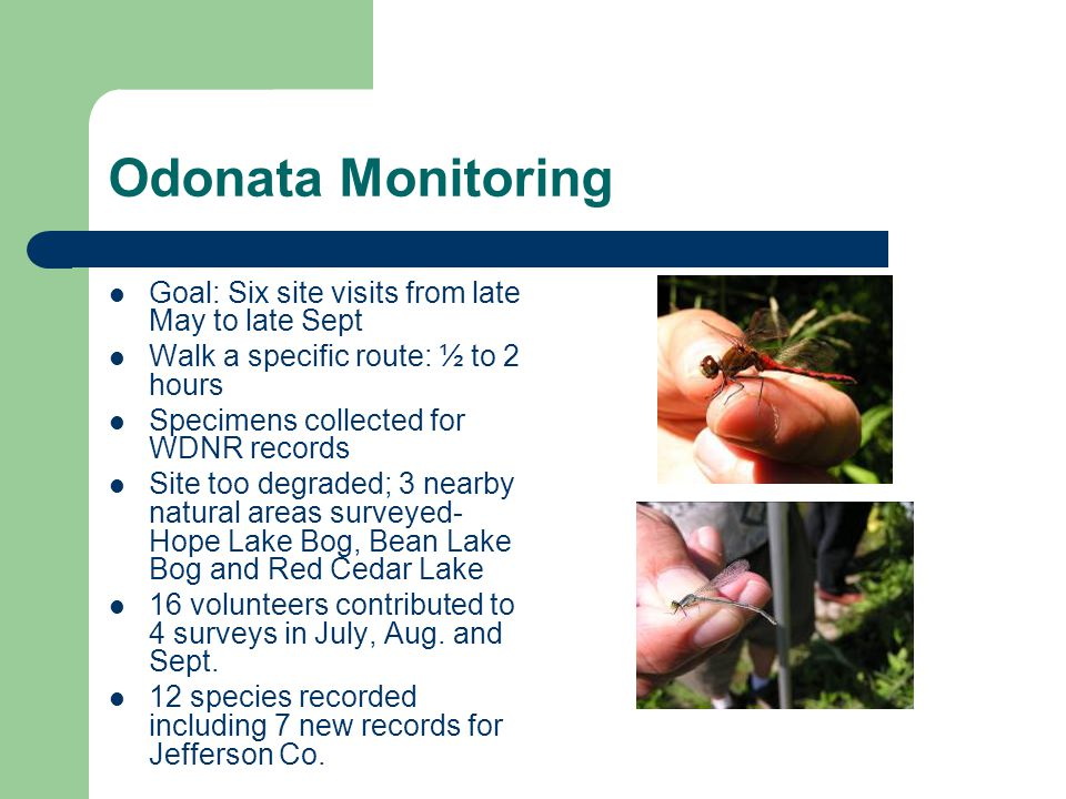 Odonata Monitoring Goal: Six site visits from late May to late Sept Walk a specific route: ½ to 2 hours Specimens collected for WDNR records Site too degraded; 3 nearby natural areas surveyed- Hope Lake Bog, Bean Lake Bog and Red Cedar Lake 16 volunteers contributed to 4 surveys in July, Aug.