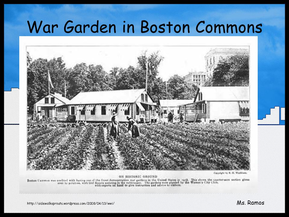 War Garden in Boston Commons http://sidewalksprouts.wordpress.com/2008/04/13/wwi/ Ms. Ramos