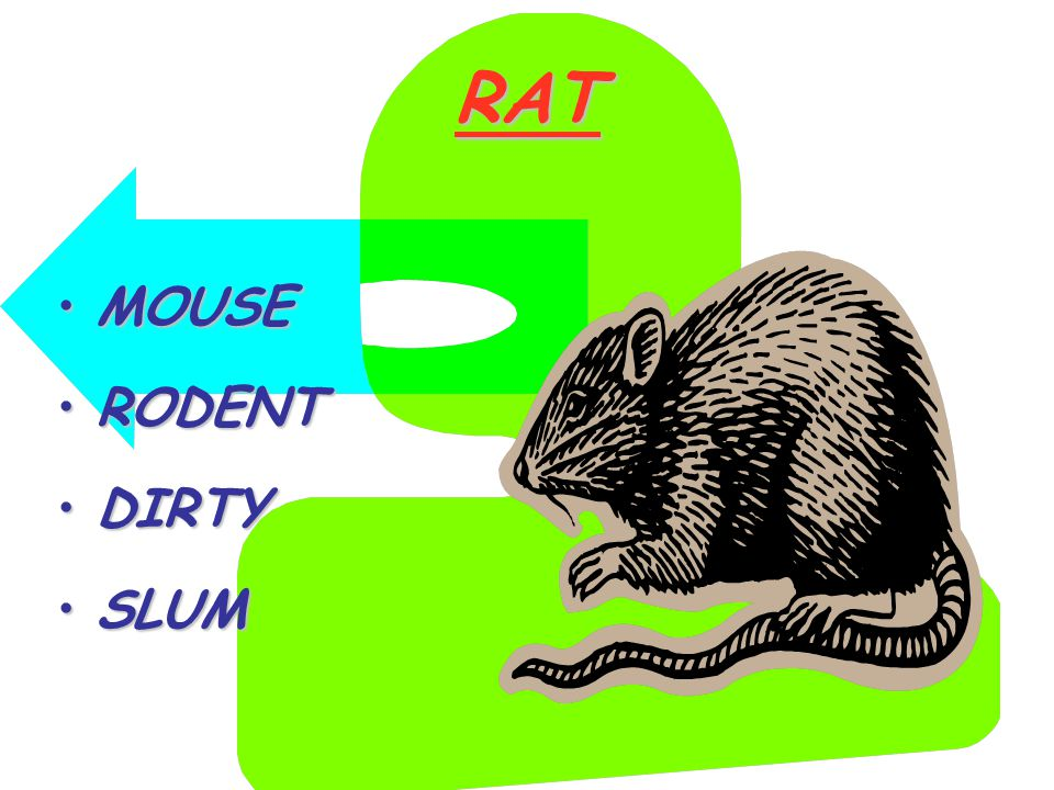 RAT MOUSEMOUSE RODENTRODENT DIRTYDIRTY SLUMSLUM