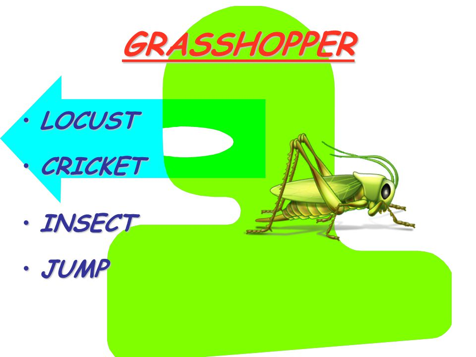 GRASSHOPPER LOCUSTLOCUST CRICKETCRICKET INSECTINSECT JUMPJUMP