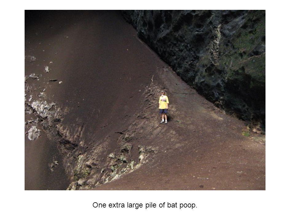 One extra large pile of bat poop.