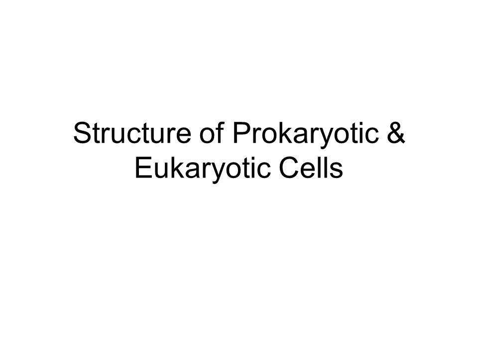 Structure of Prokaryotic & Eukaryotic Cells
