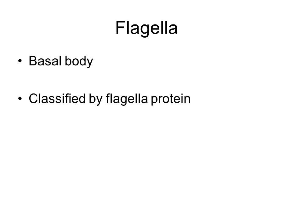 Flagella Basal body Classified by flagella protein